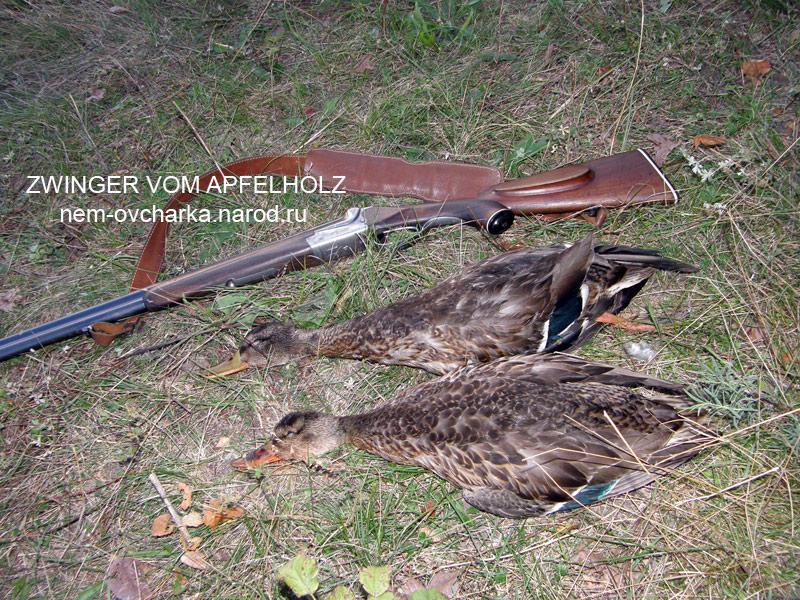 Натаска и дрессировка охотничьих собак. охота в Полтаве