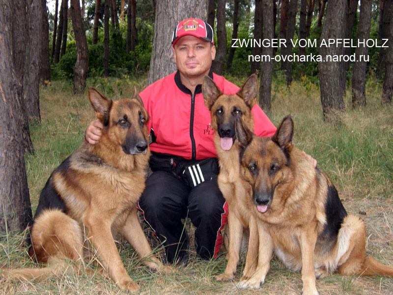 Немецкая овчарка продажа щенков и дрессировка в Полтаве